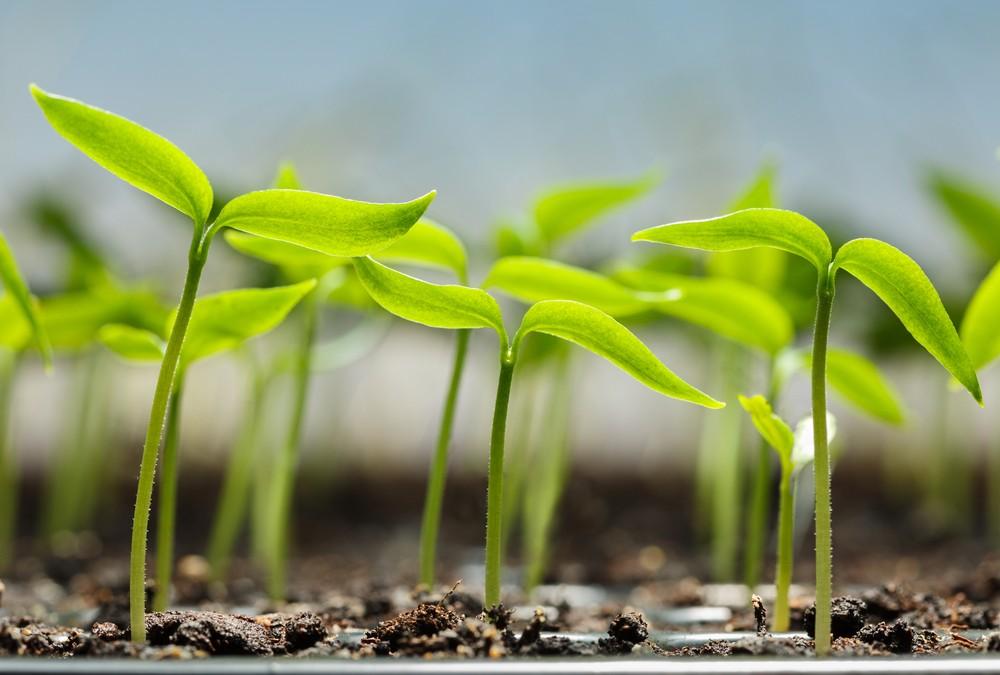 How Gardening Can Teach Children Self-Sufficient Living