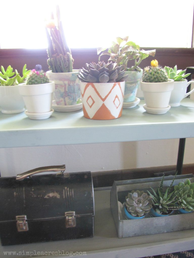 indoor succulent and cactus garden