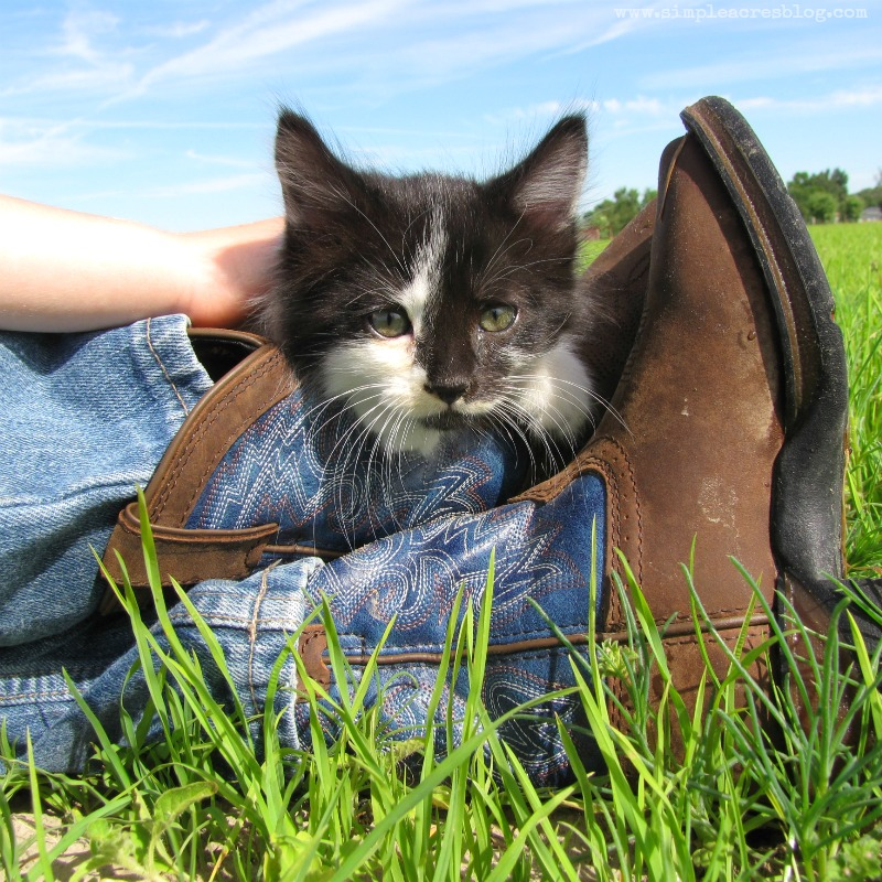 kittys and cowboy boots