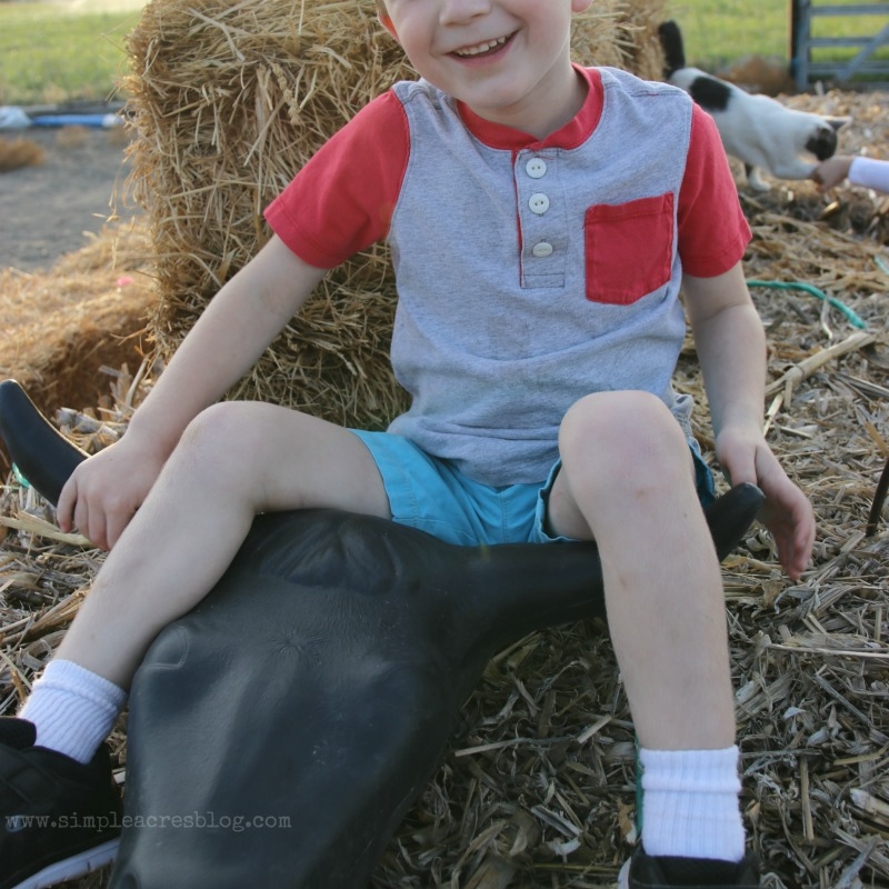 playing-on-the-farm
