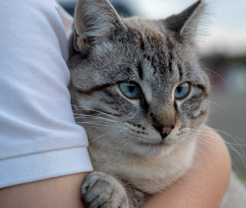How Cats Bring Joy to Family Life