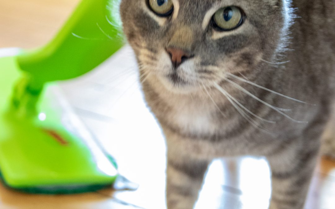 5 Easy Ways to Keep a House Clean with Pets